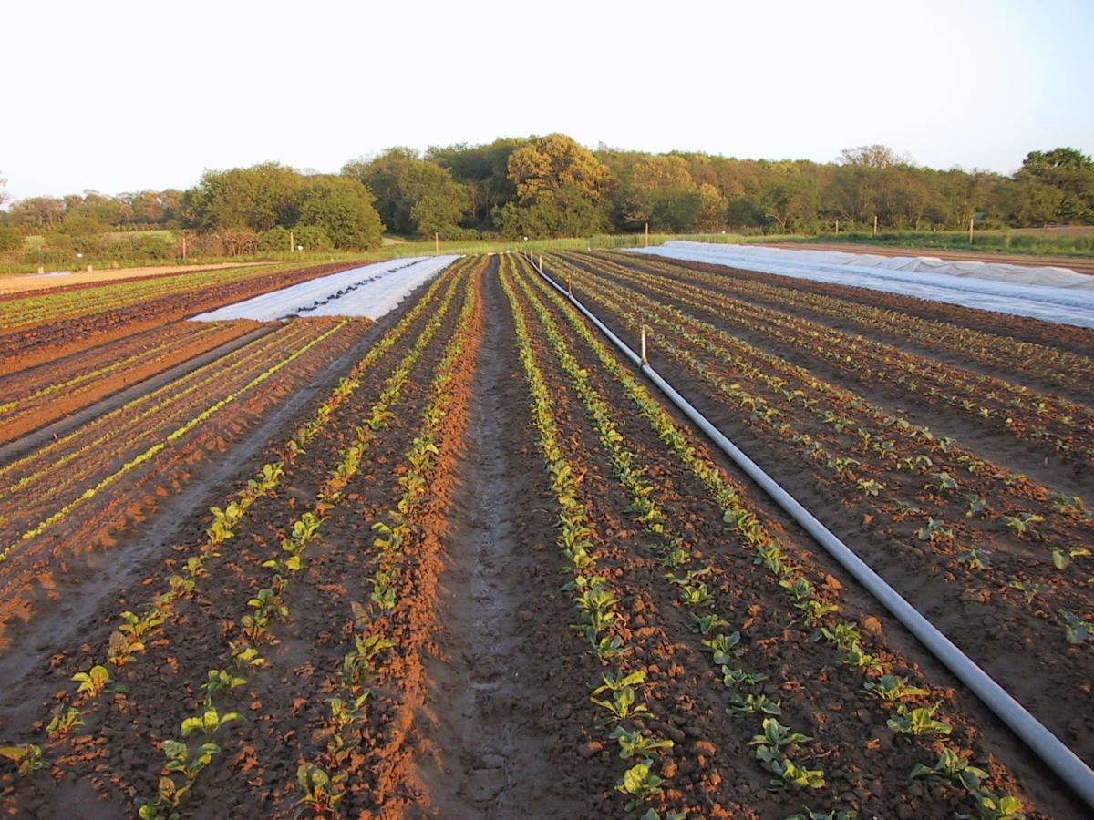 Farming Practices — Golden Earthworm Organic Farm - Long Island