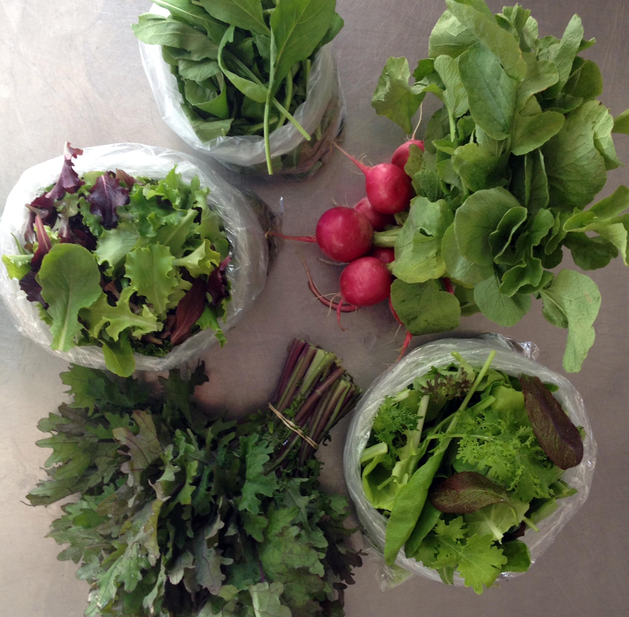 Clockwise from top: Arugula, Radishes, Mustard Mix, Red Kale, Lettuce Mix