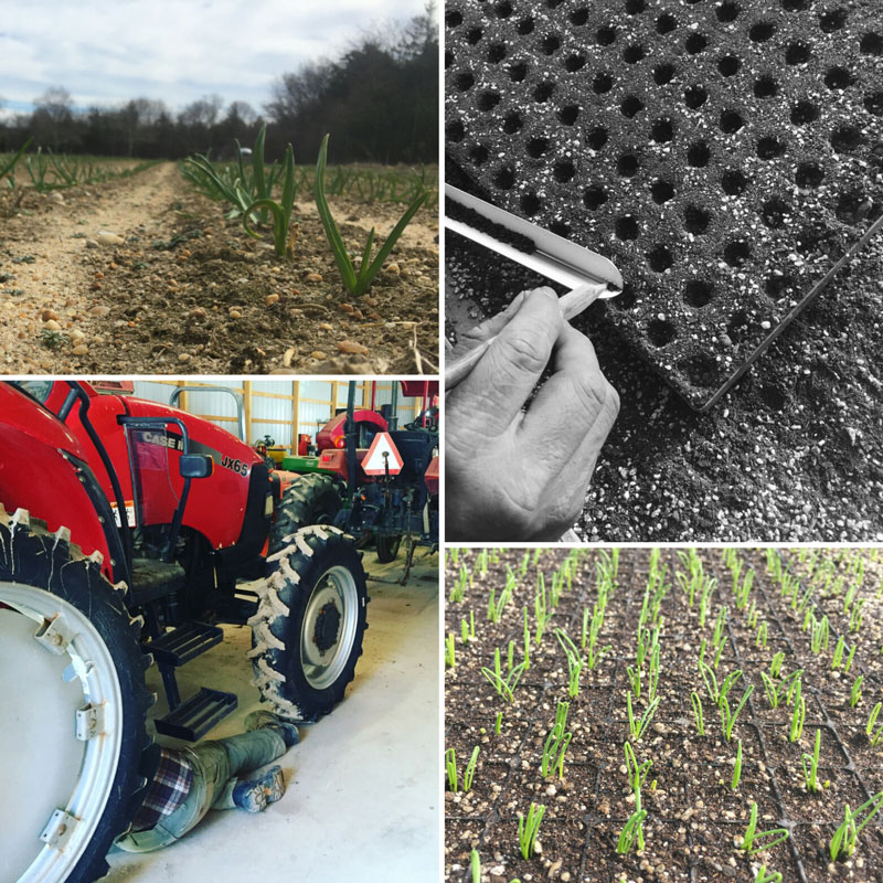 Clockwise from top left: Garlic coming up in the field, Seeding onions by hand, Onions germinating in the greenhouse, Tractor maintenance.