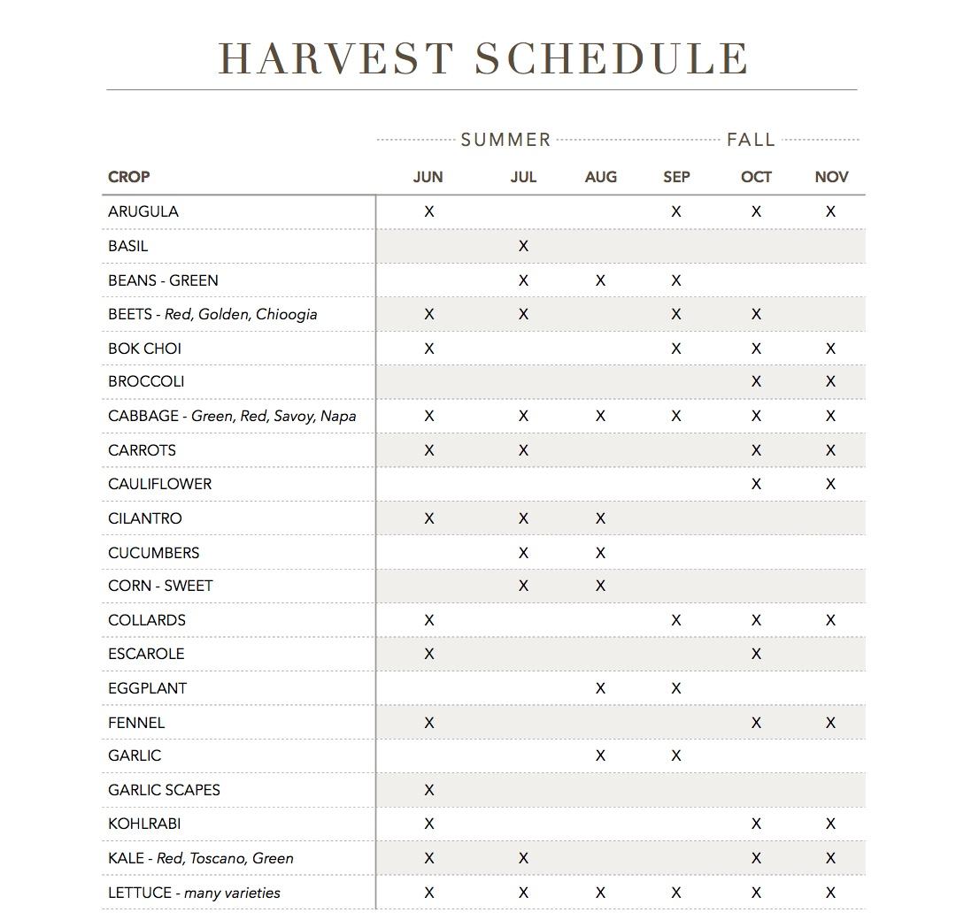 harvestp1.jpeg