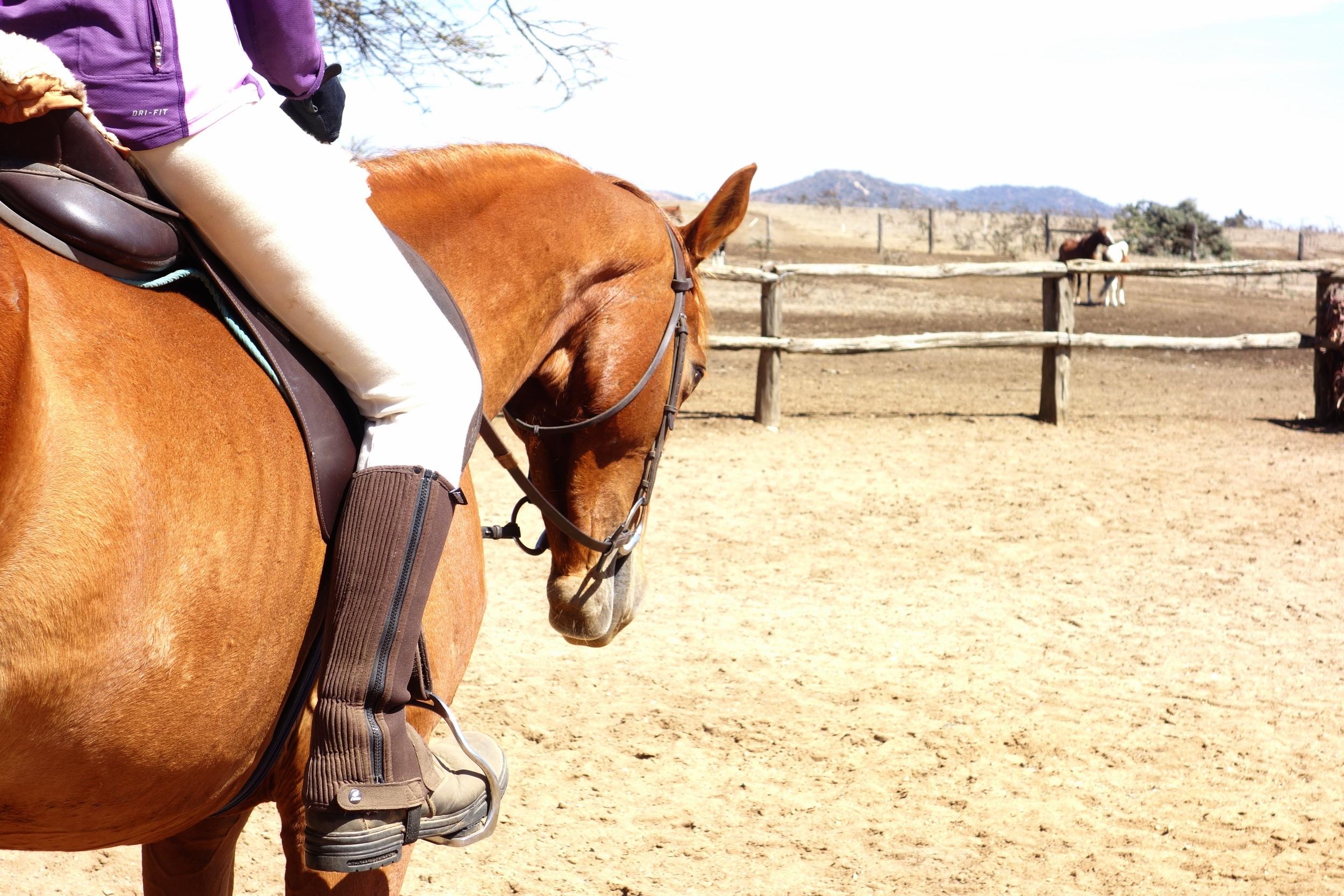 equitation science training ridden solutions .JPG