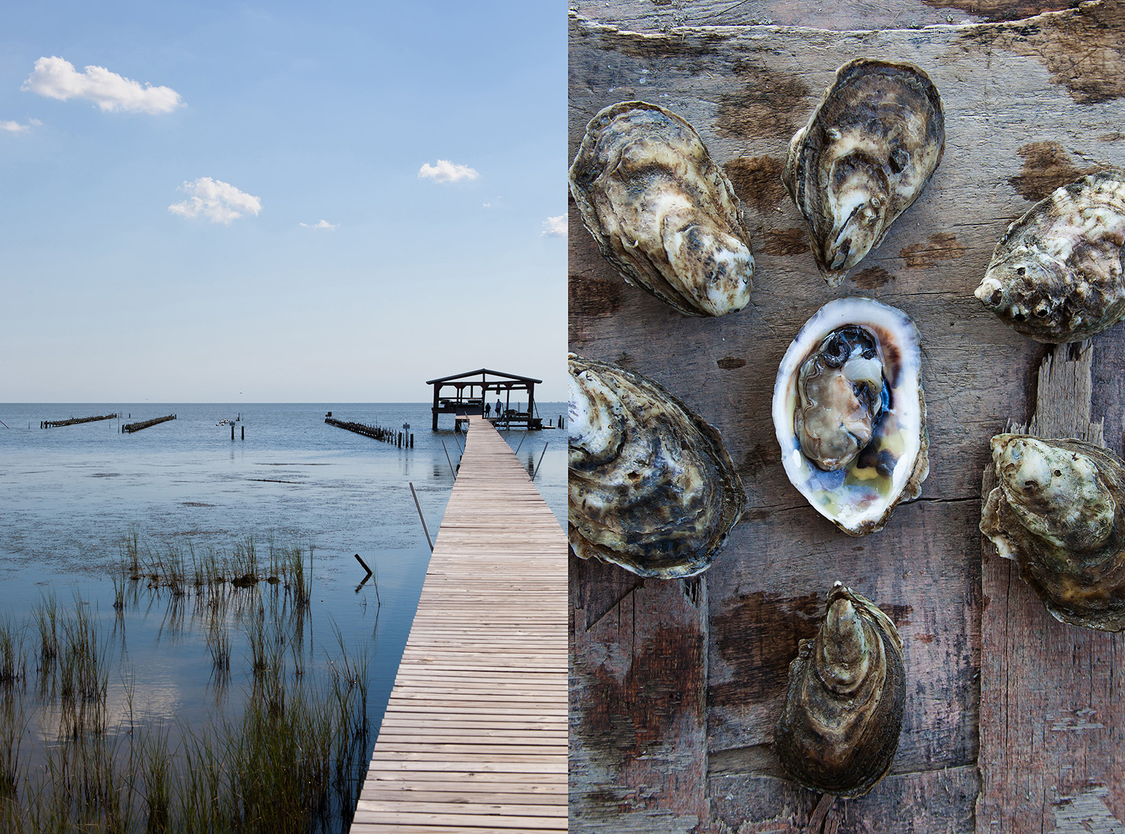Point aux Pins Oyster Farm | Bayou La Batre, Alabama