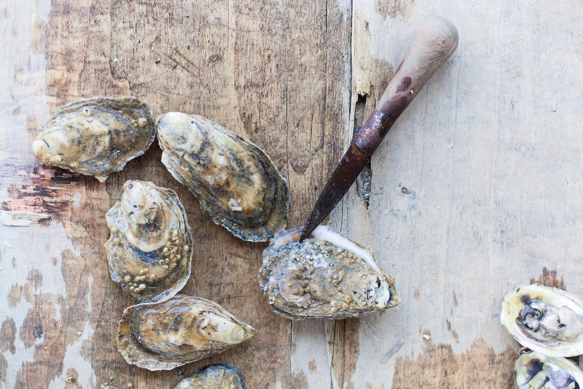 Oyster Farm_s.jpg