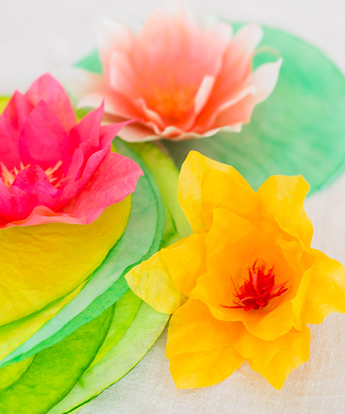 water-lilies-contact.jpg