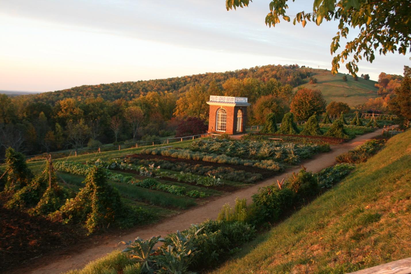 Monticello Vegetable Garden, November, 2011. Photo by Peter J. Hatch, courtesy of Thomas Jefferson Foundation