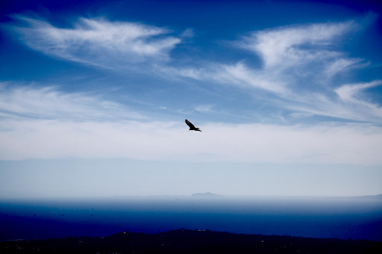 Hawk | Santa Barbara, California | Photo by Amanda Michaels-Zech.jpg