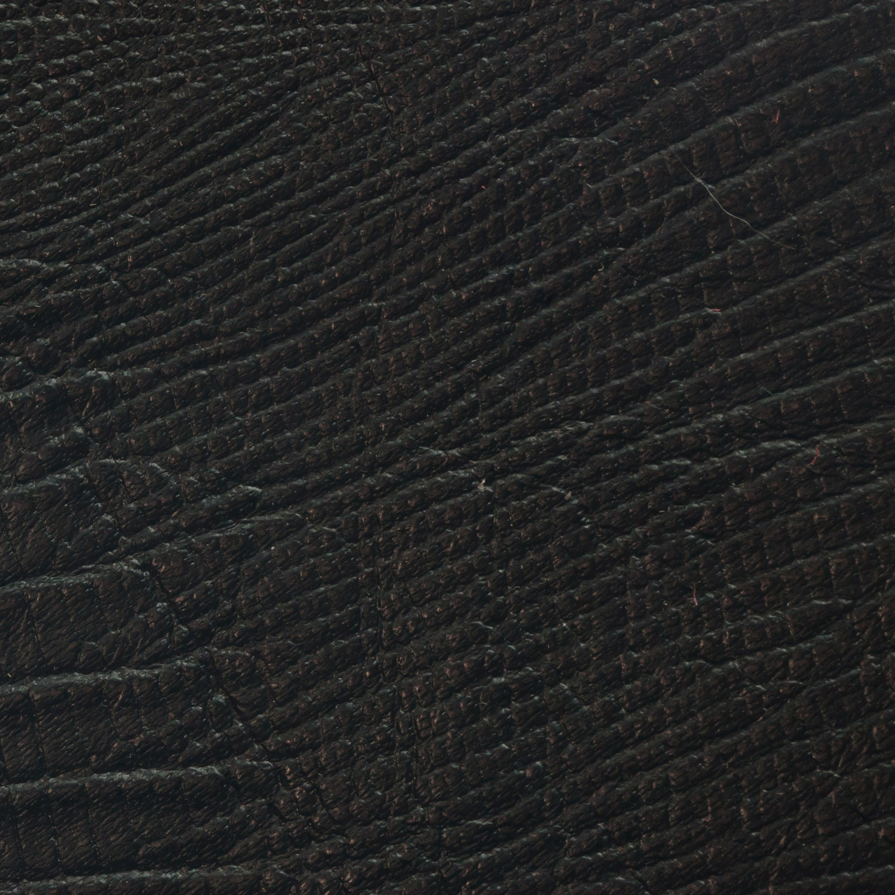 Premium_blacksnake.jpg