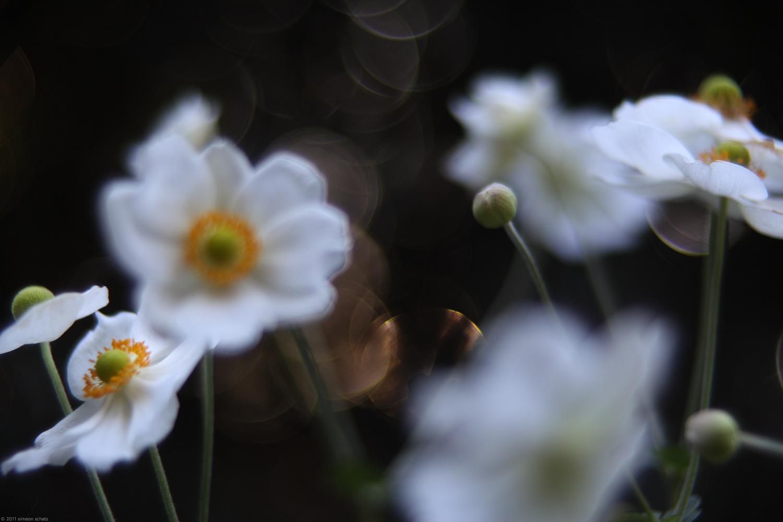 flowers_kiss.jpg