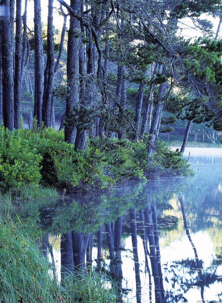 treegardens.jpg