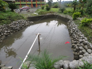 The lower tilapia pond with bigger fish .