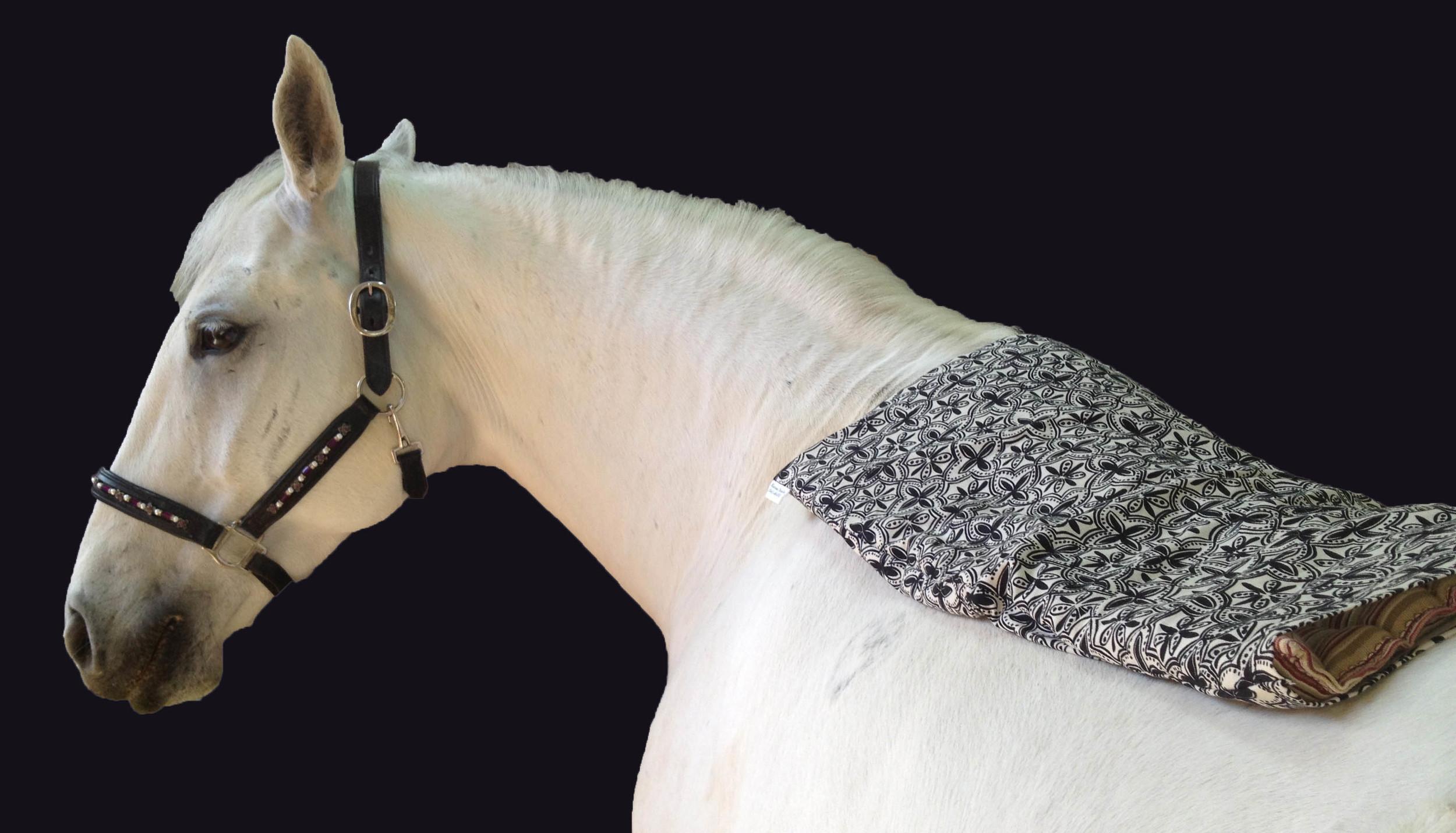horsepack7.jpg