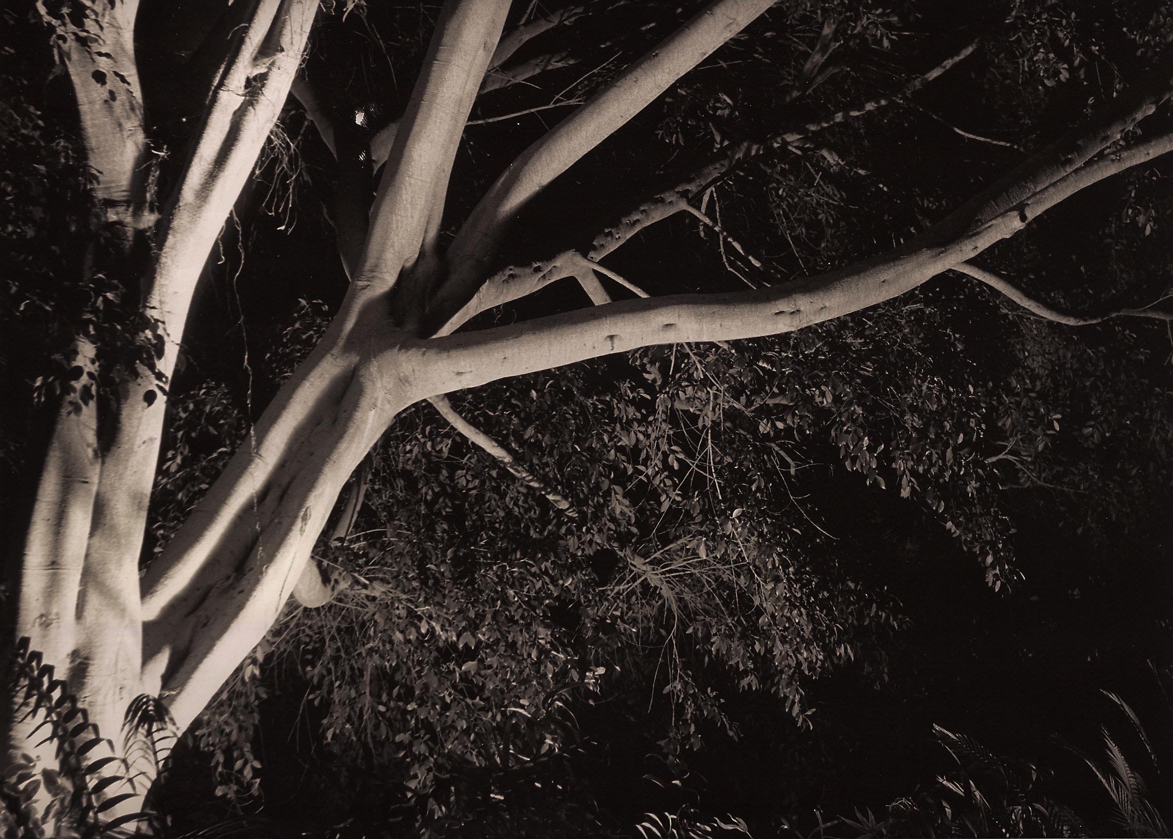 TreeWithFilter.jpg