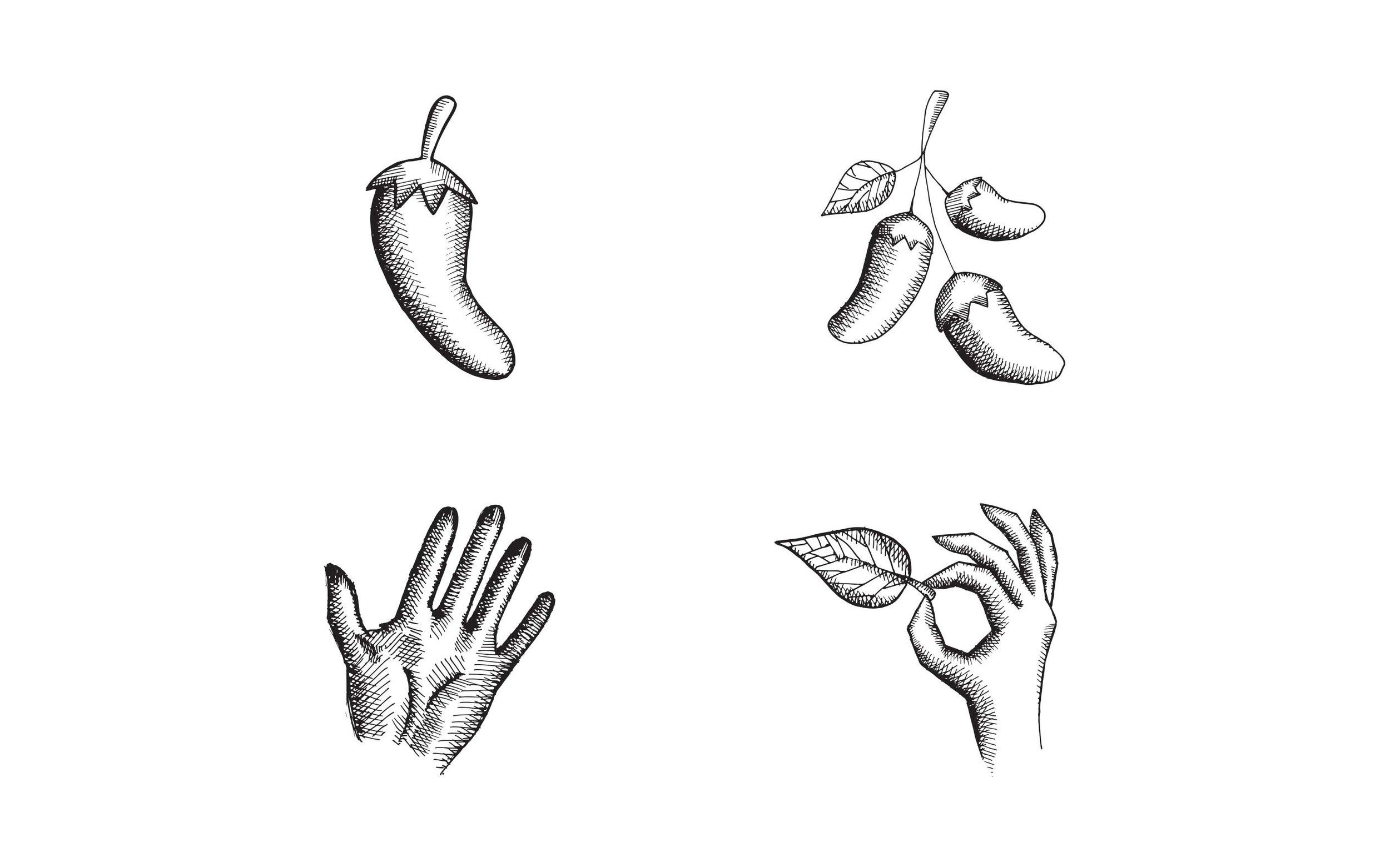 bravado-spice_illustration-1.jpg