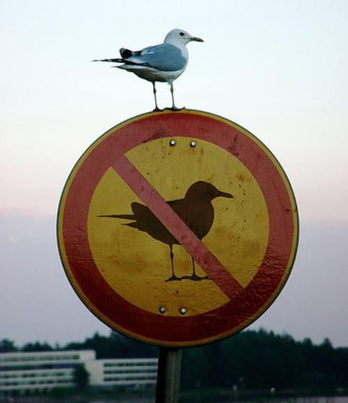 """But your Honor, the defendant is a bird and thus is unable to read signs."""