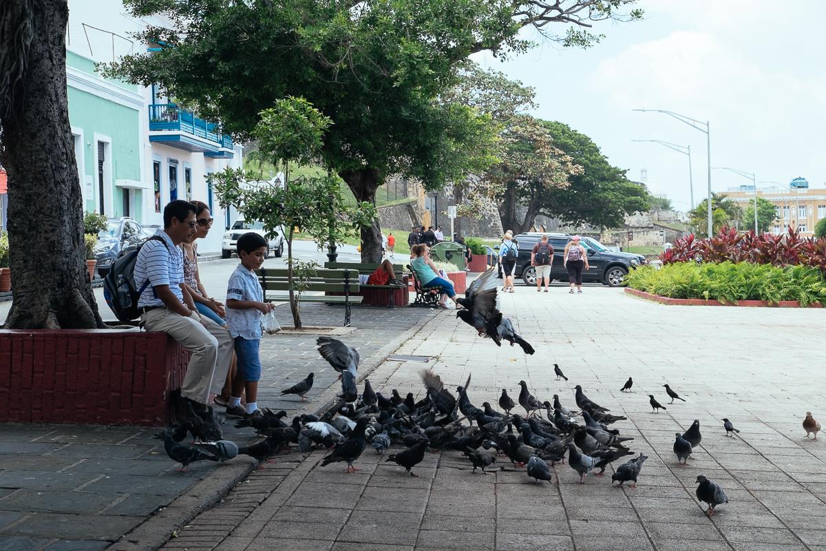 Pidgeon Family 2 San Juan
