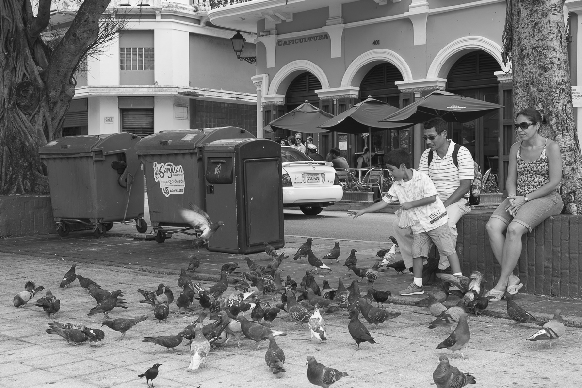 Pidgeon Family 4 San Juan