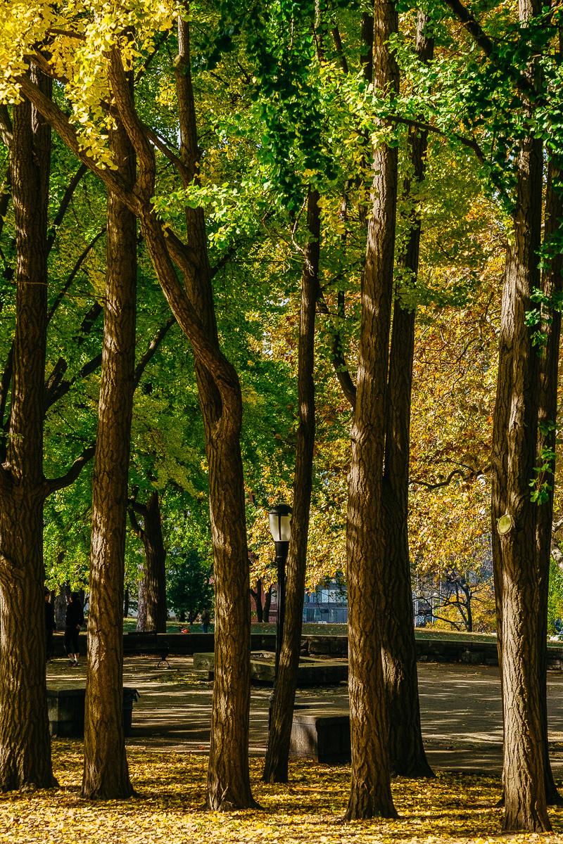 Fort Greene Park-2.jpg