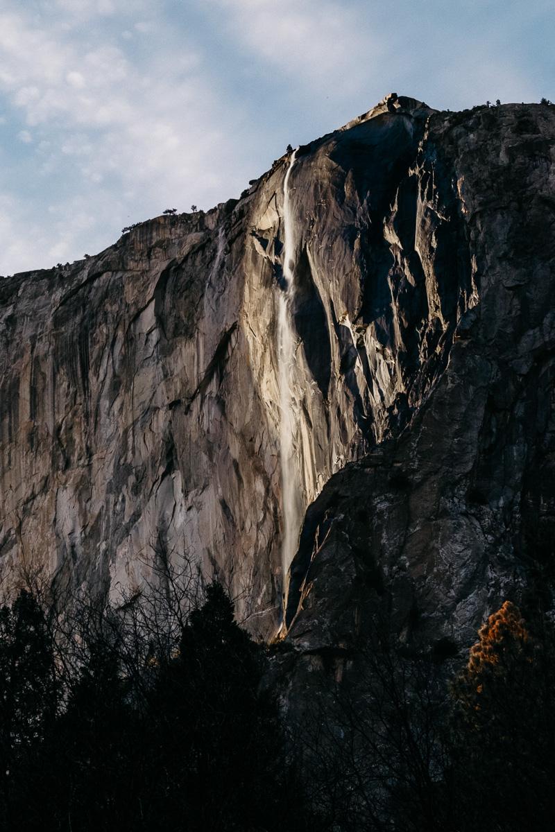 Yosemite Horsetail