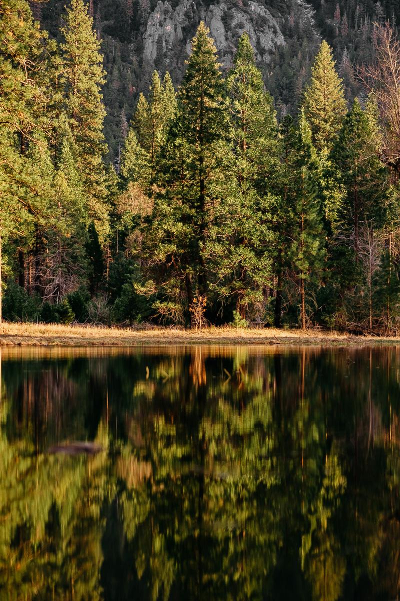 Yosemite Valley Tree Lake