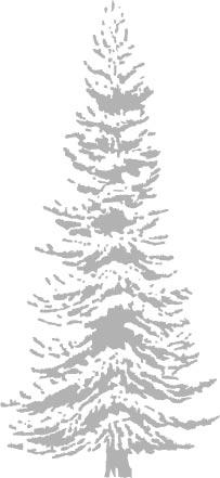 illo_christmas_botanical.jpg