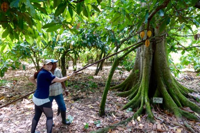 Succulent Chocolates_Cacao Plantation - 92.jpg