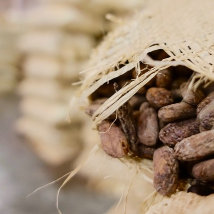 Succulent Chocolates_Cacao Plantation - 37.jpg