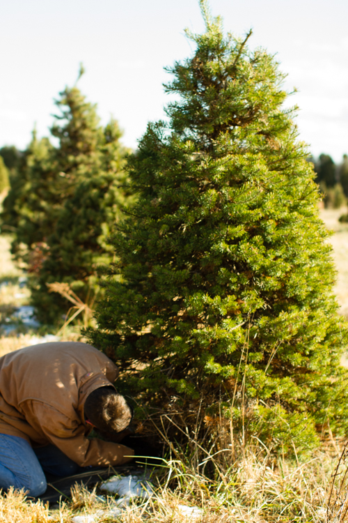 Christmastreefarm10