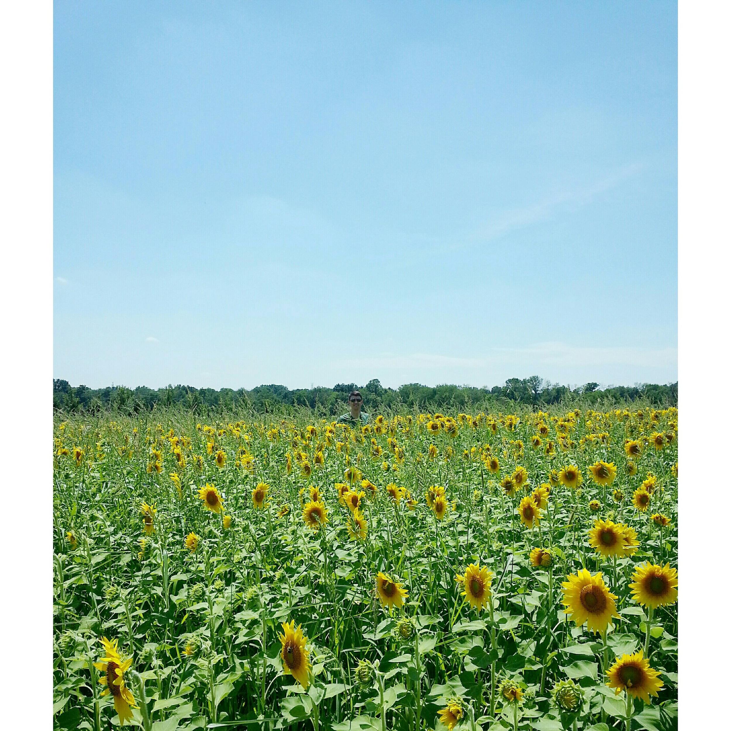 Sunflower Field Photo Shoot