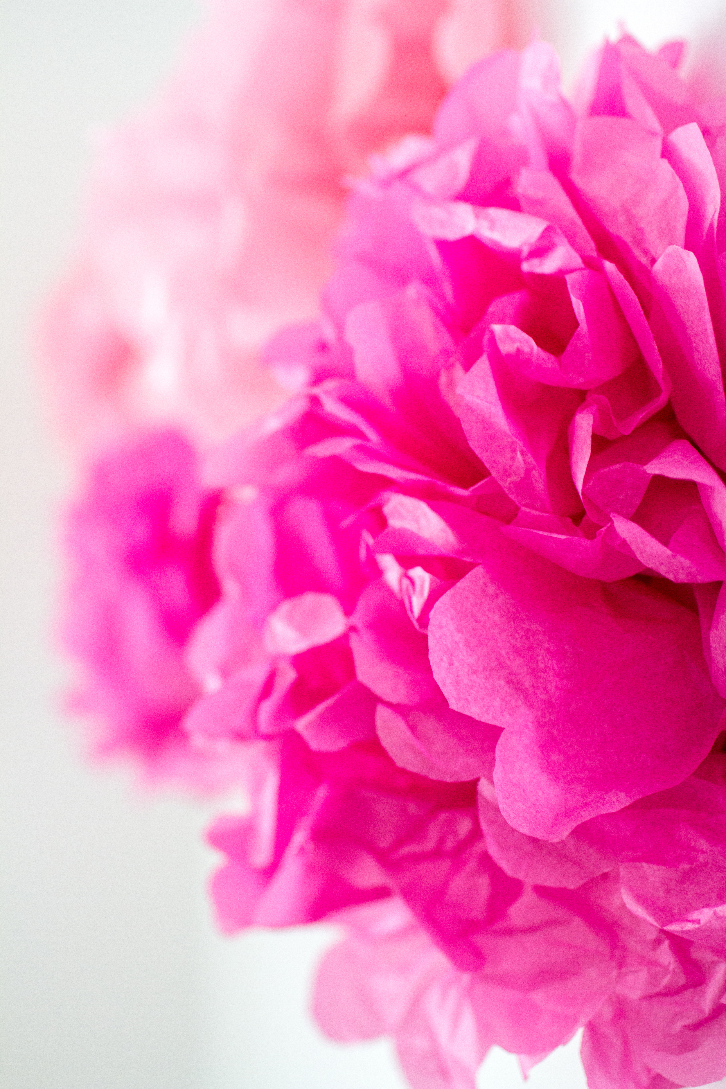 Pink tissue paper poofs | Lorin Marie Photography