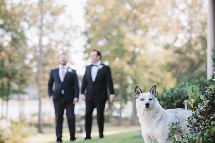 dog wedding photo bomb