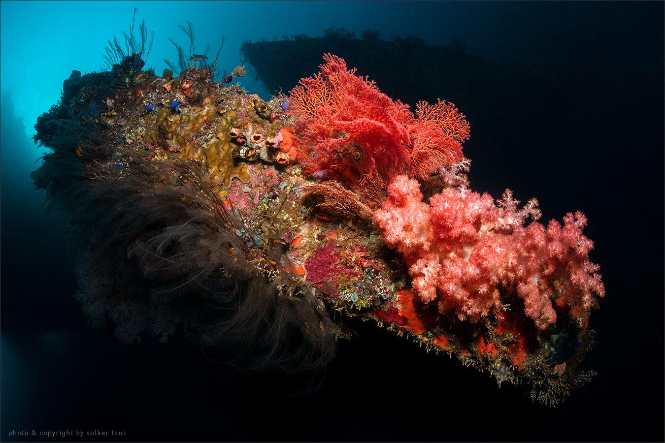   indonesia   bali   tulamben   spot [•] liberty wreck