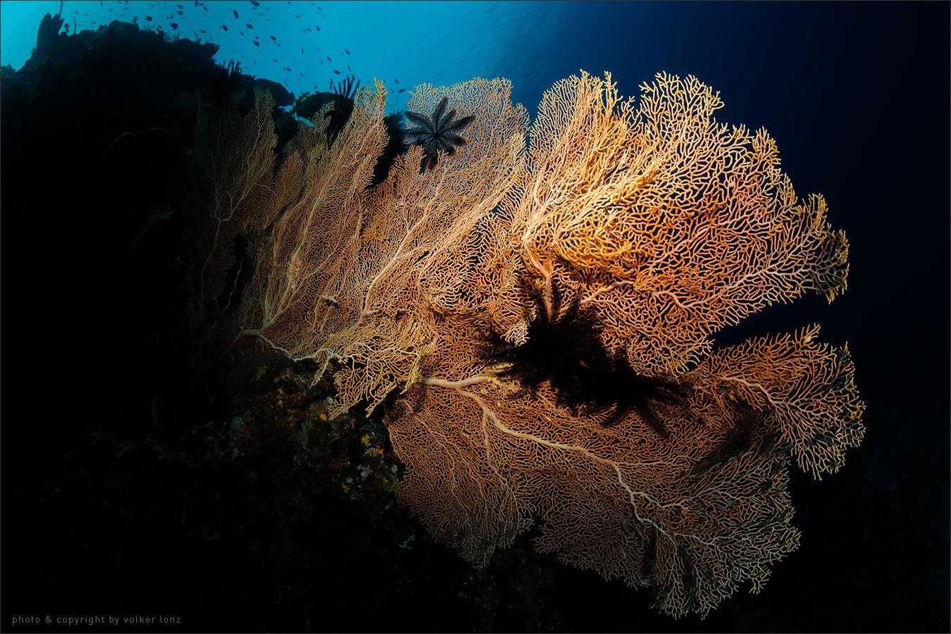   indonesia   siladen   bunaken marine park   spot[•] siladen selatan