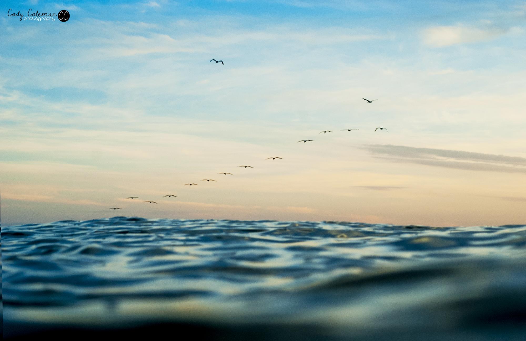 Pelicans_birds_Water_Flight