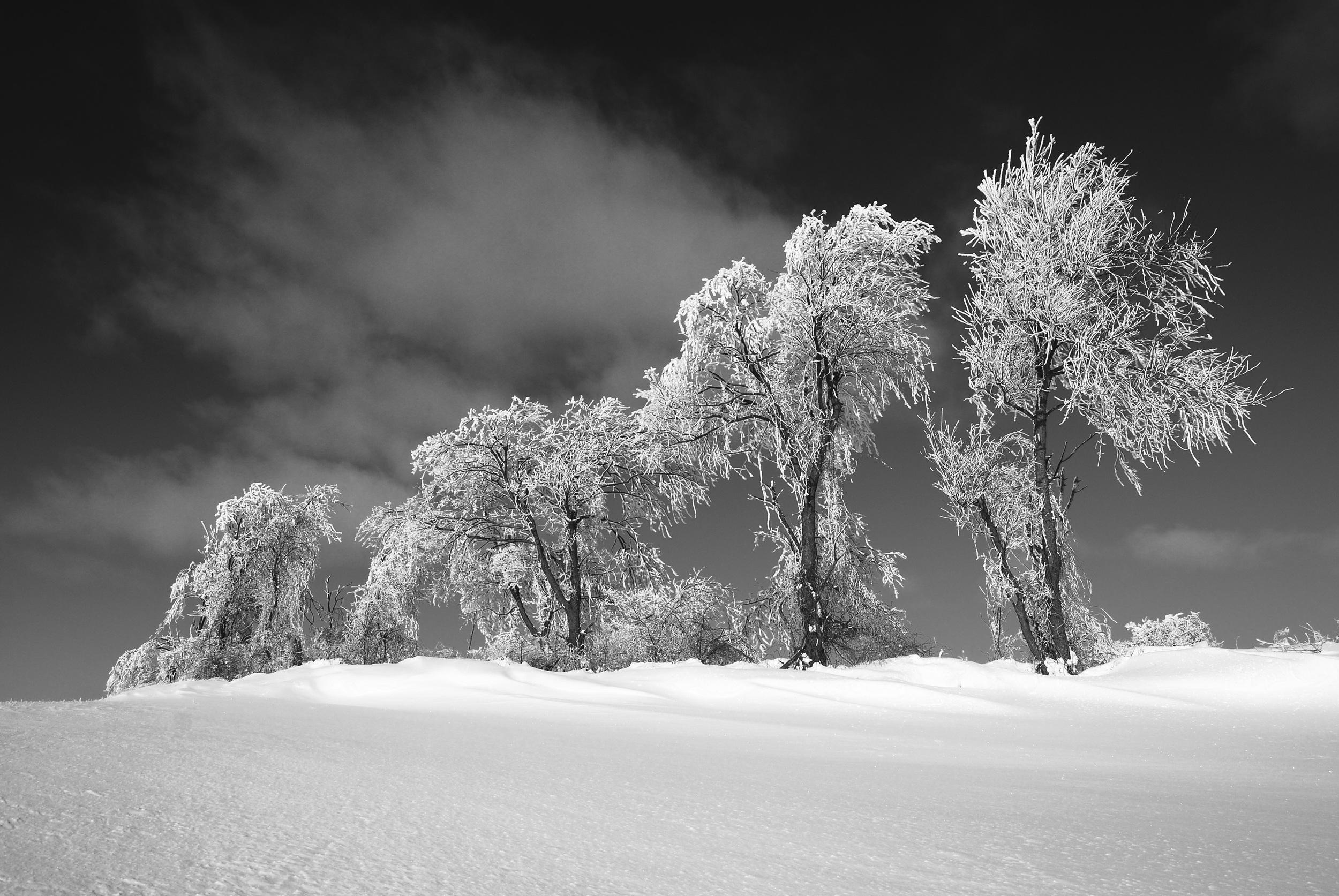 Ice Trees I   Clinton, New York