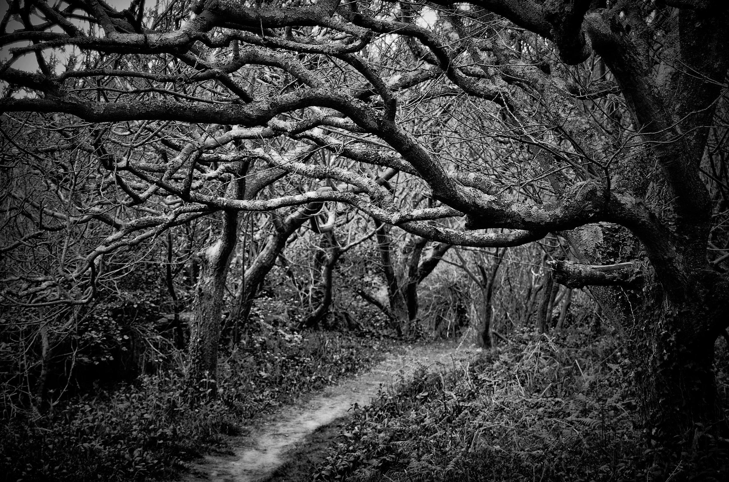 Path  St. Loy, Cornwall, England