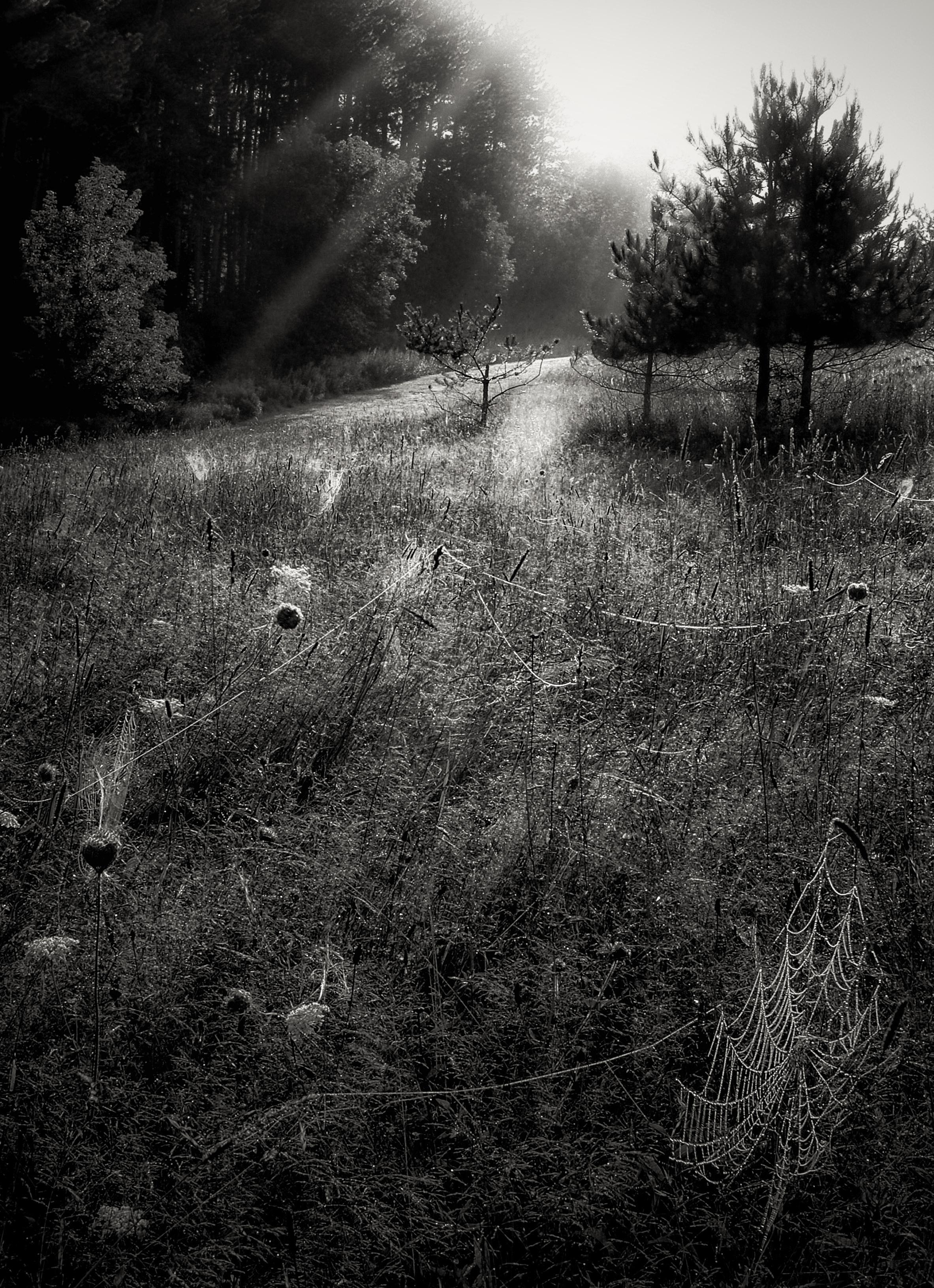 They Were Here Last Night   Orb weaver meadow, Hamilton, NY