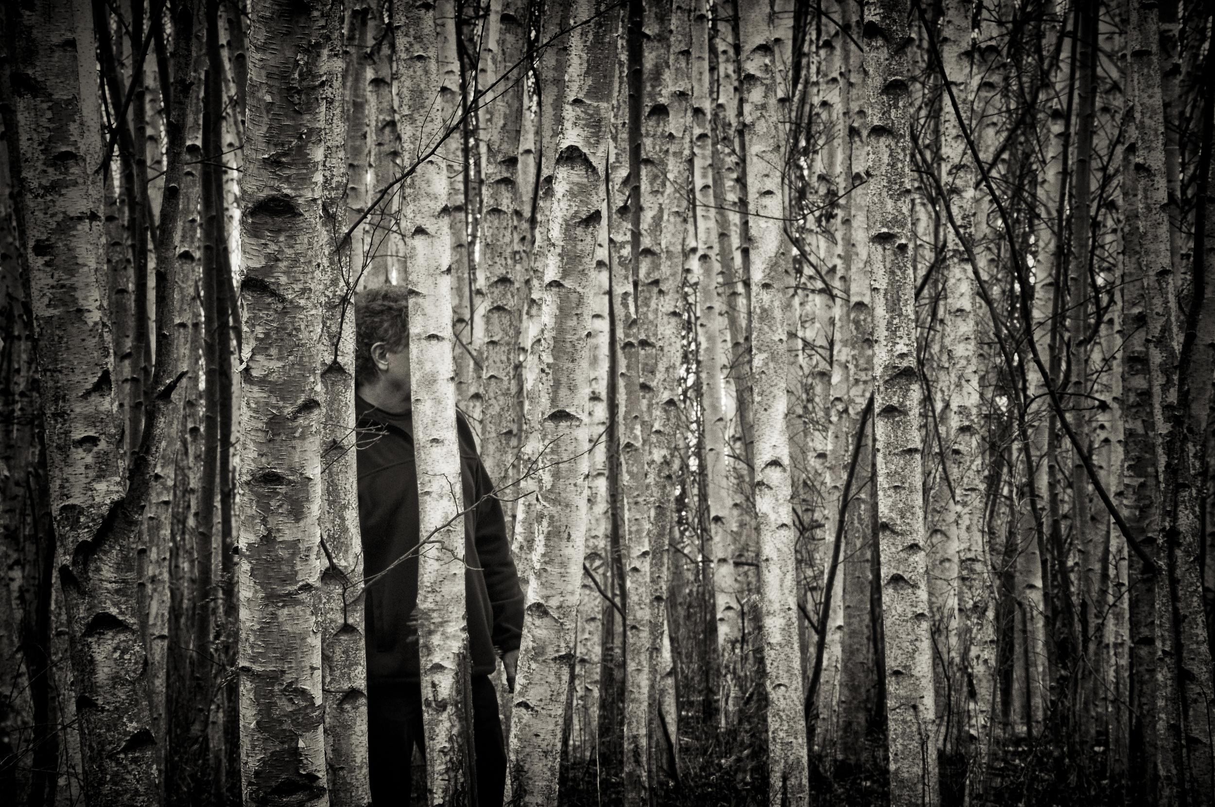 The Birches   Near Skaneateles, N.Y.