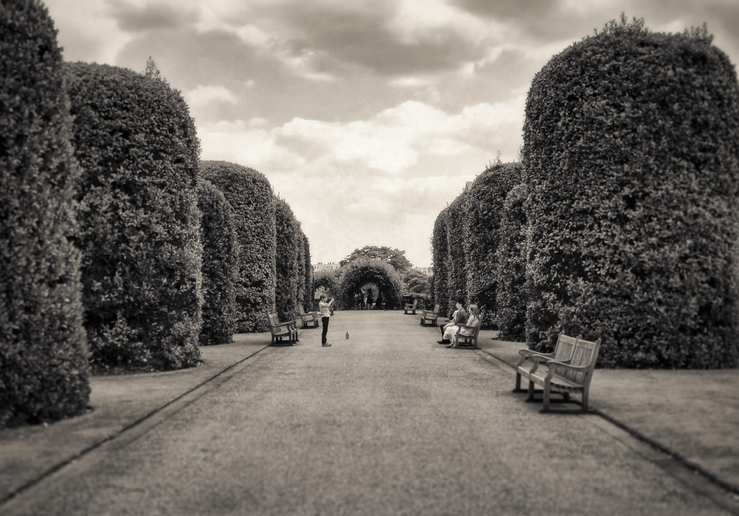 The Photographer   Kensington Gardens, London