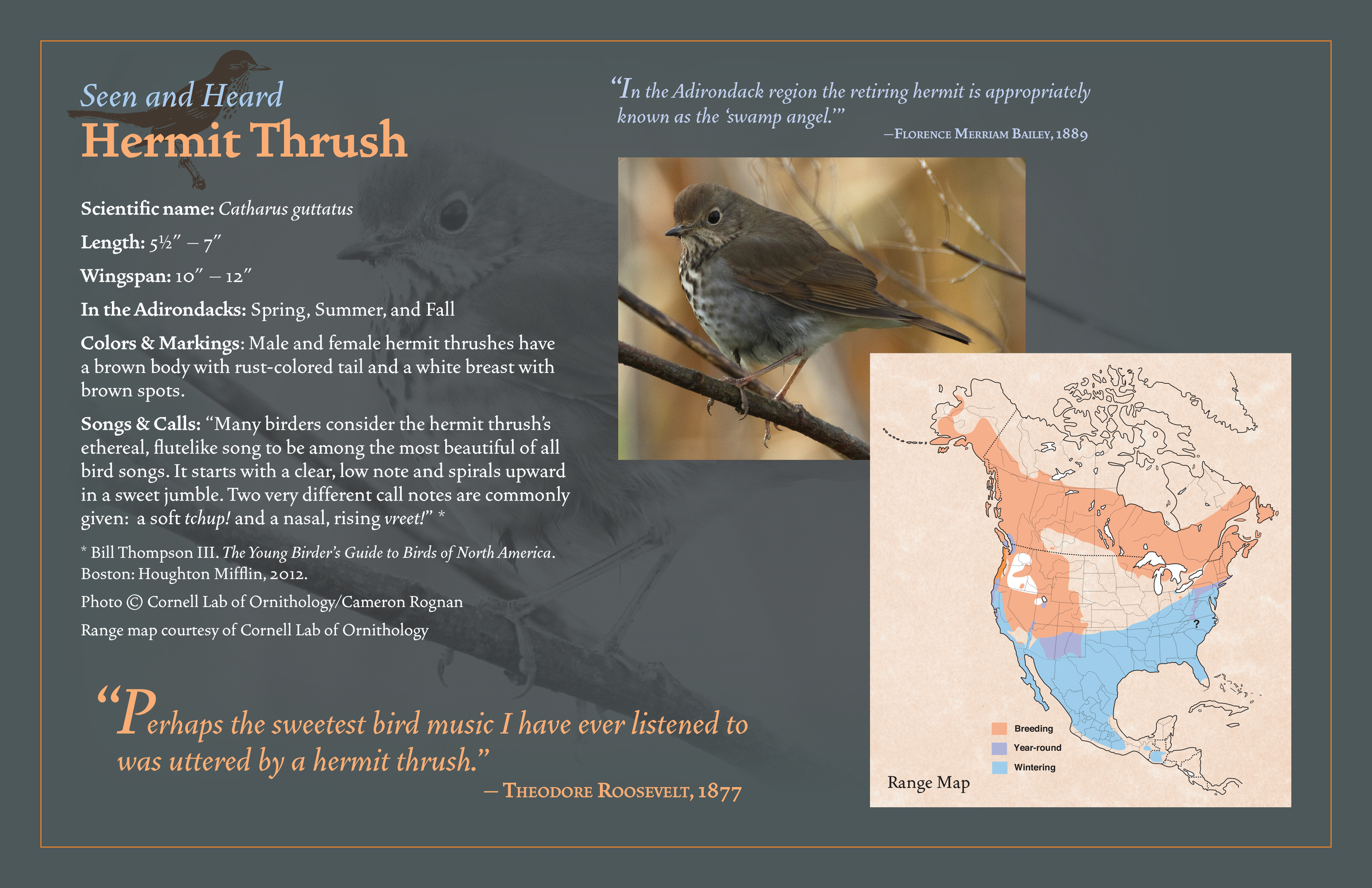"""Outdoor panel from """"Birder's Byway"""" trail   Adirondack Museum, Blue Mountain Lake, N.Y."""
