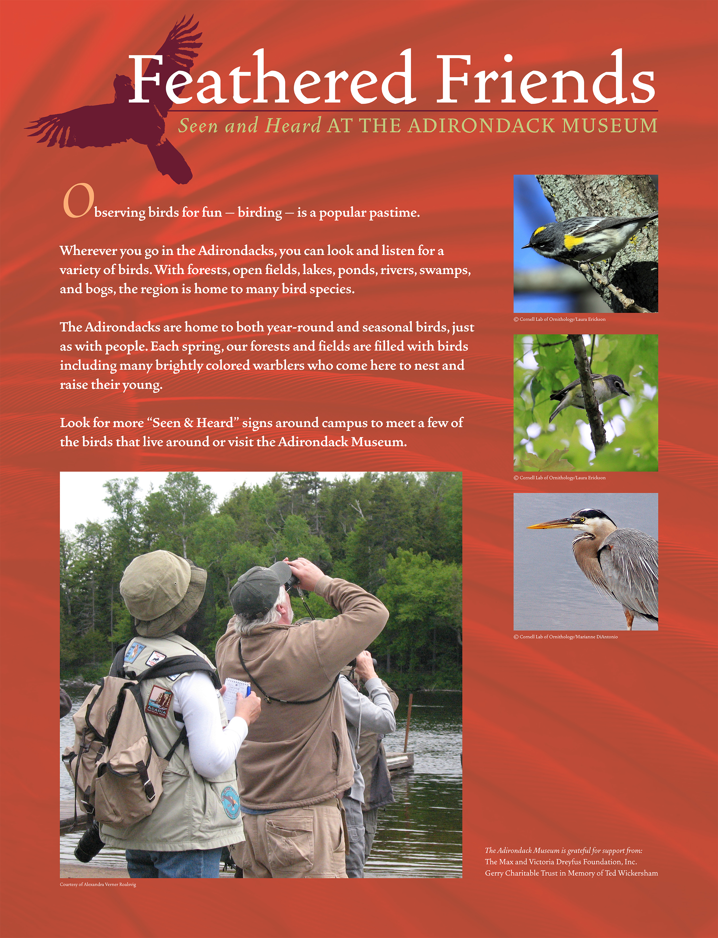 """Outdoor panel from """"Birder's Byway"""" trail   Adirondack Museum, Blue Mountain Lake, N.Y"""
