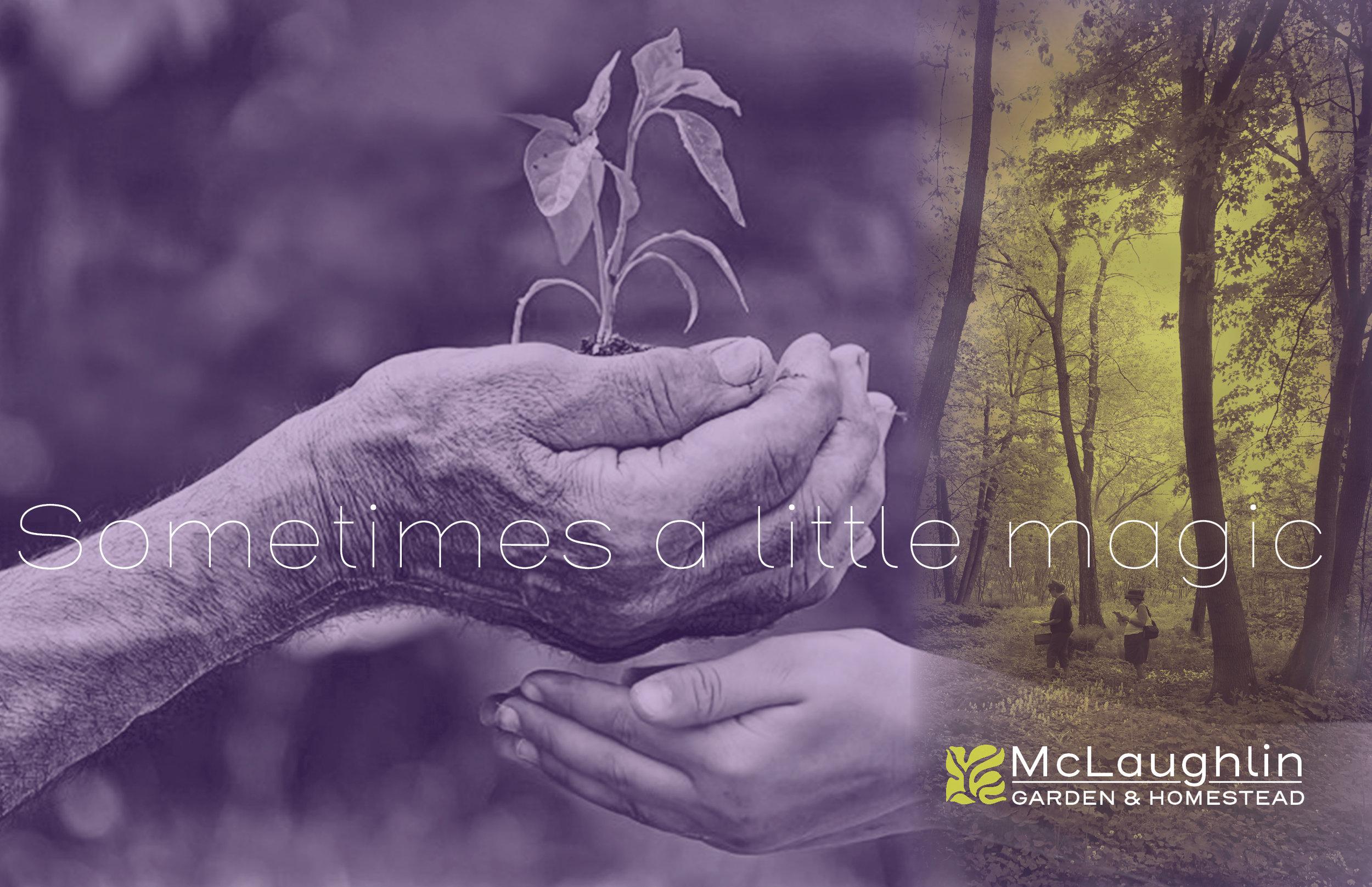Logo and brochure cover for McLaughlin Garden & Homestead   South Paris, Maine