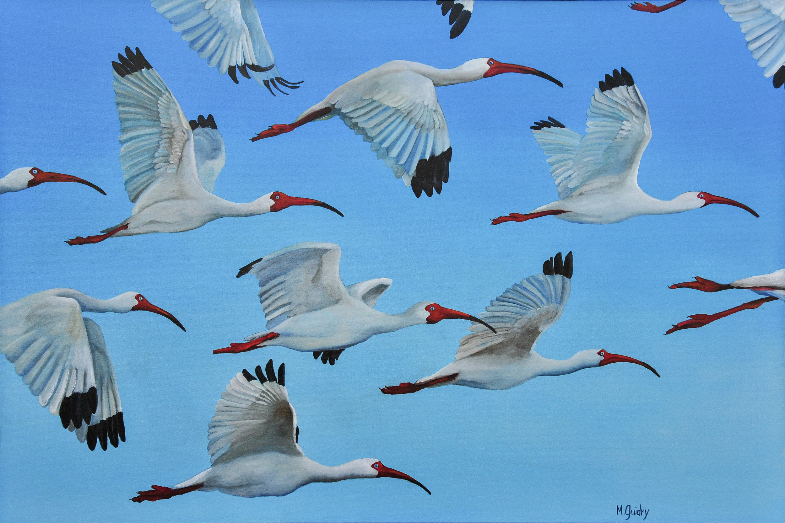 les_becs_croches_white_ibis__louisiana_m.guidry_michael_guidry_oil_painting_marsh_new_orleans_artist.jpg.jpg