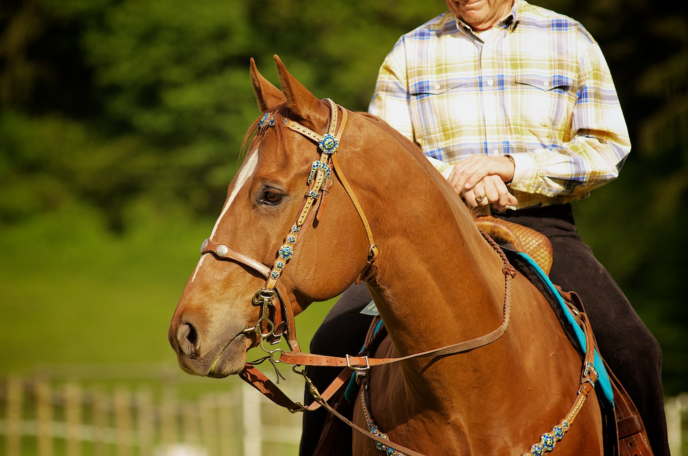 Equestrian Photography, Salem and Keizer, Oregon