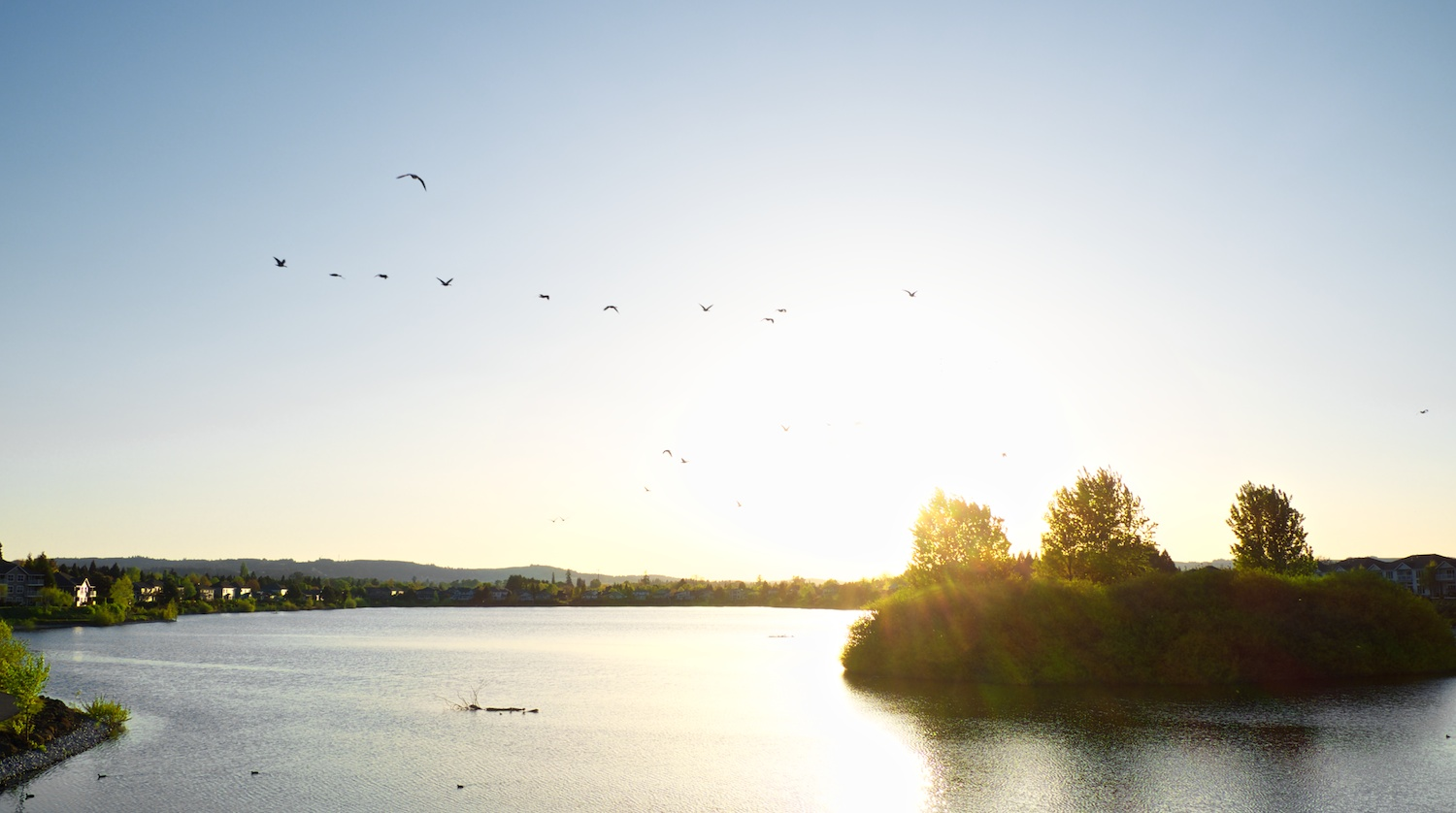 Geese landing at Staats Lake, Keizer, Oregon. FujiFilm XE-1, 18-55mm.