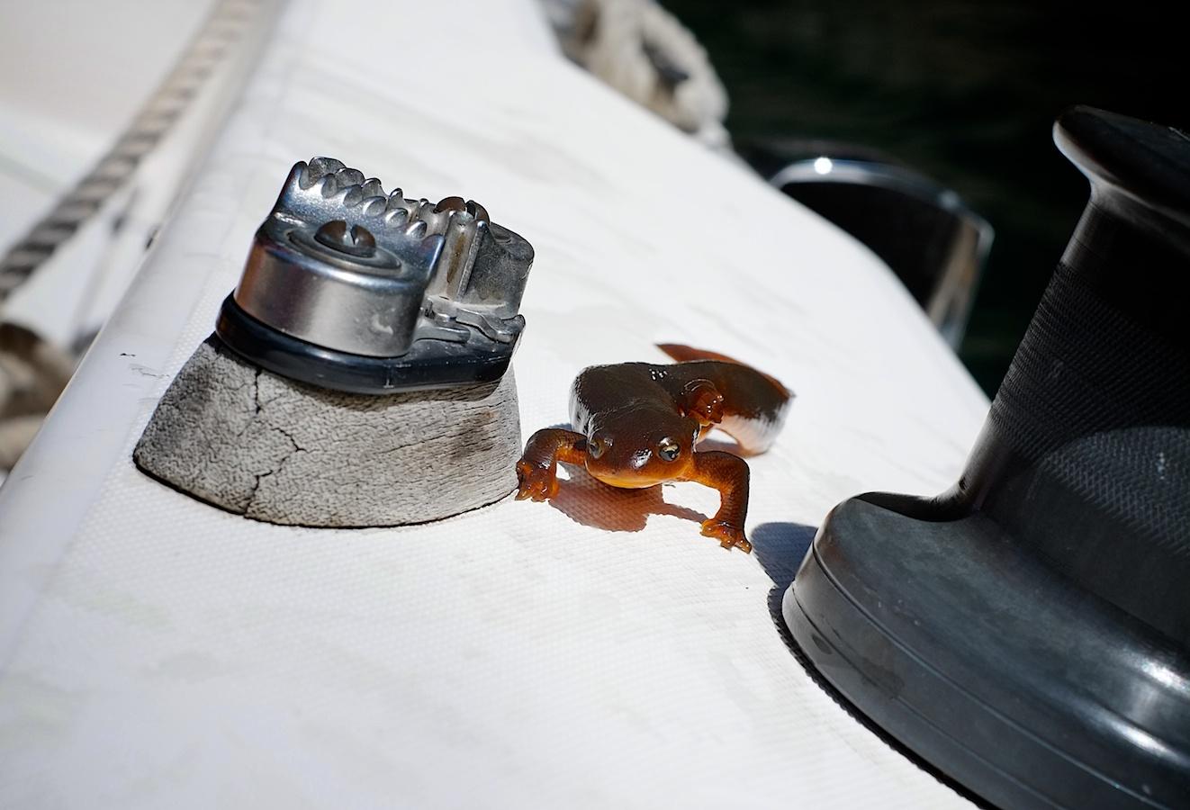 Salamander Parade. FujiFilm X-E1, 35mm f/1.4.