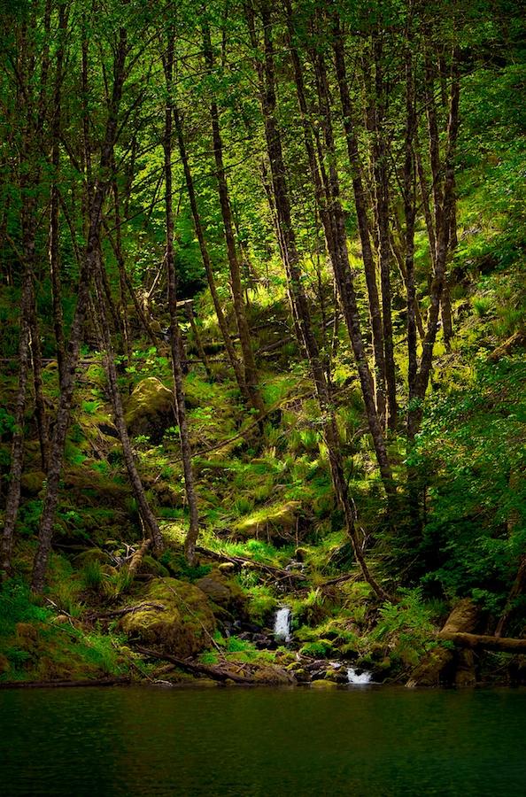 Sunlight on the forest floor. Detroit, Oregon.Fujifilm X-E1, XF18-55mm @ 55mm, f/8, 1/250, ISO 800