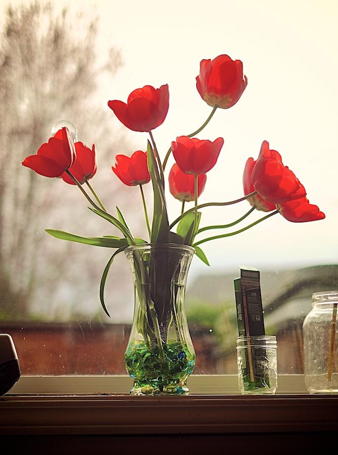 Tulips in the morning light. Fujifilm X-E1, XF35mm f/1.4 @ f/1.4, 1/4000, ISO 200