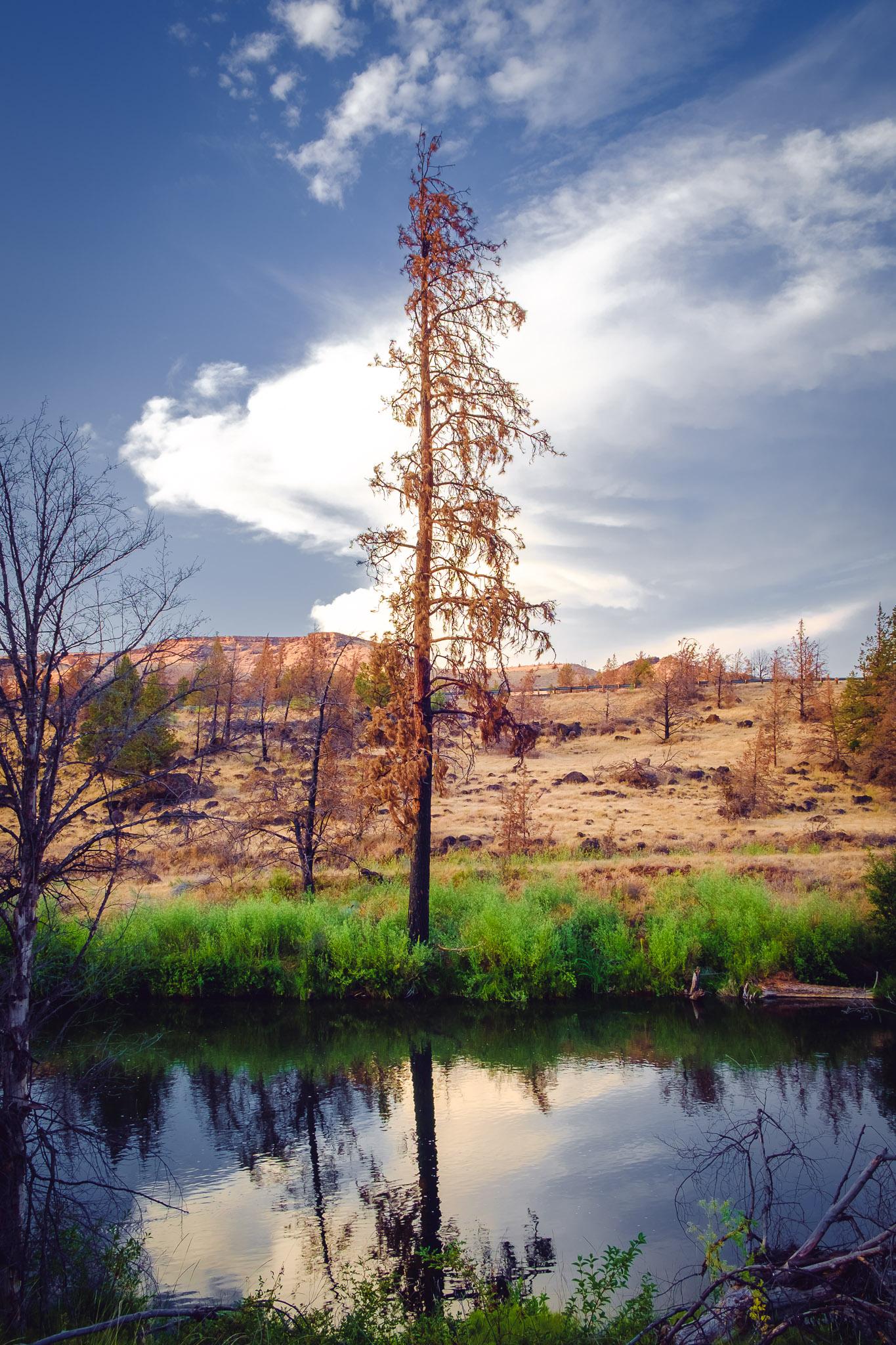Fire Tree. Warm Springs, OR. Fujifilm XE-1, XF18-55mm @ 18mm, ISO 200, f/8, 1/30.
