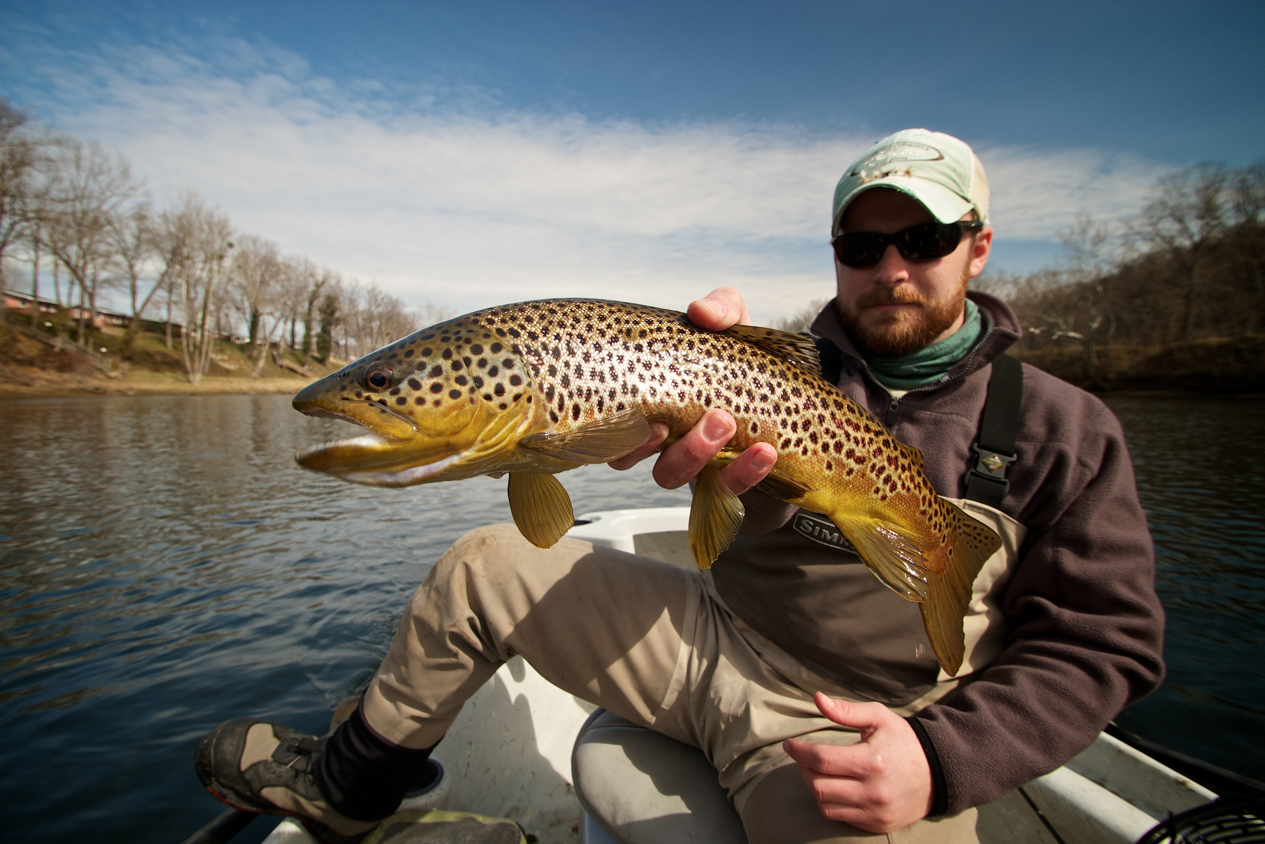Chance with a solid brown