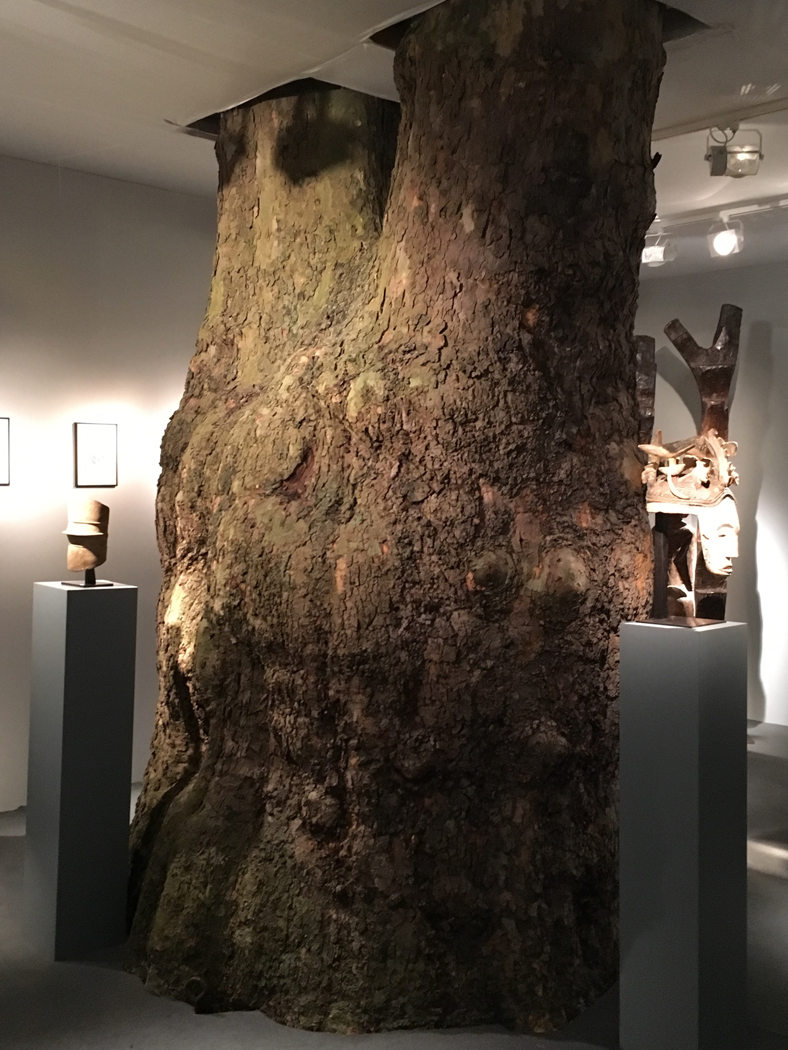 Nature & Works of Art !– one of the tree trunks of Berkeley Square around which the Pavilion is built – on Stand C12 Gallerie Monbrison